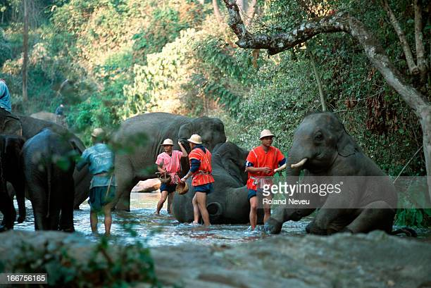 Elephants at a remote camp near Chiang Mai, with their mahouts..