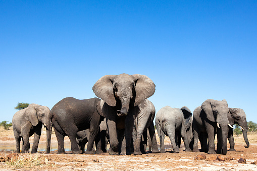 Elephants at a waterhole 508382052