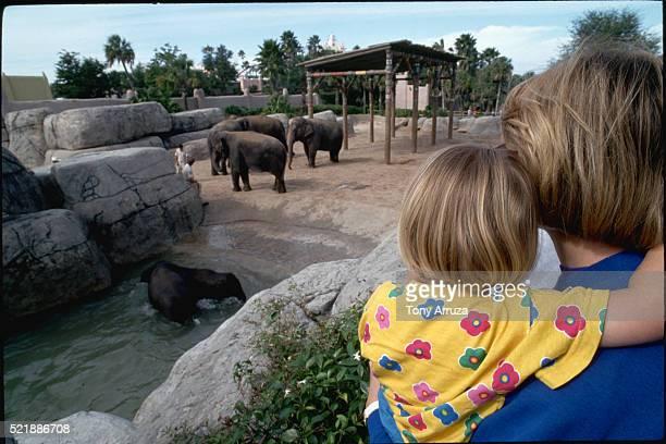 Elephants at Busch Gardens Zoo