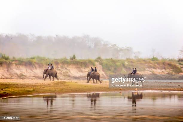 elephants at chitwan national park in nepal. - chitwan stock pictures, royalty-free photos & images