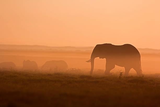 Elephants At Dawn Wall Art