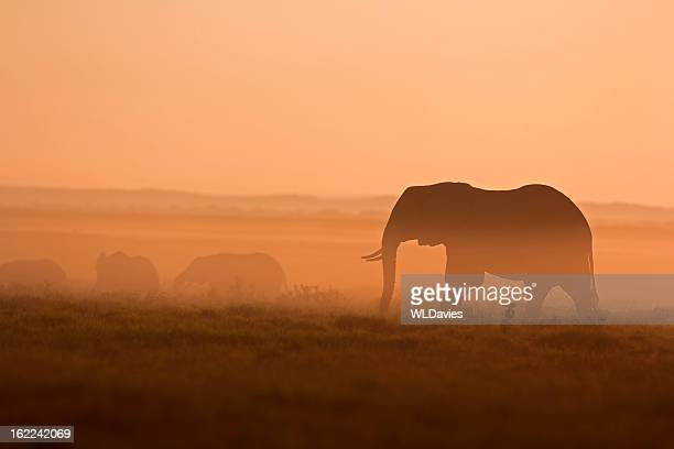 Elephants at dawn