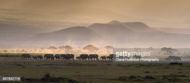 elephants at sunset, amboseli national park, africa - nairobi stock pictures, royalty-free photos & images