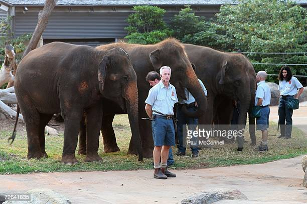 Elephants at the annual Taronga Zoo ball this year named the Elephant Ball to celebrate the arrival of the zoo's latest addition 8 Asian elephants at...