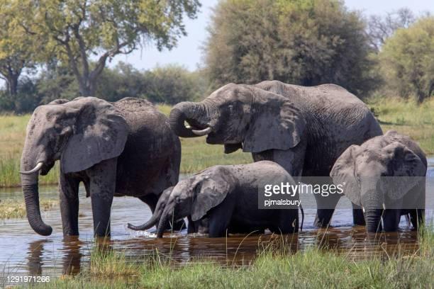 elefantes en el pozo de agua - parte del cuerpo animal fotografías e imágenes de stock