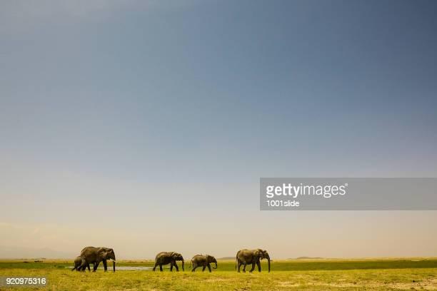 Elefantes en salvaje