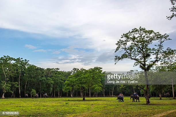 Elephants By Trees At Chitwan National Park Against Sky