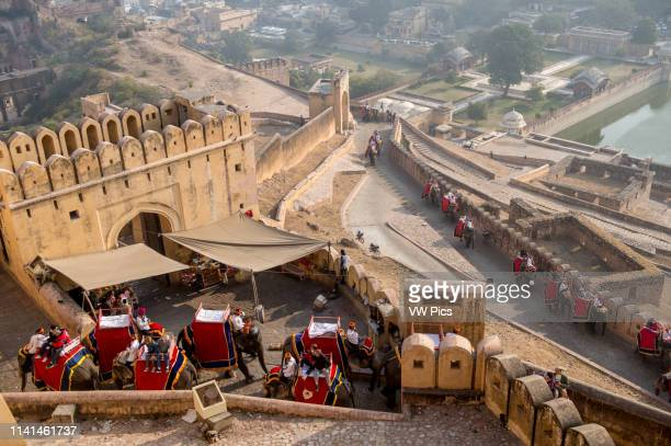 Elephants carry tourists up a stone passage to the Amer Fort in Jaipur, India.
