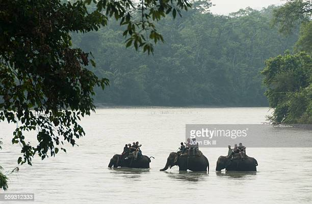 elephants carrying tourists across narayani river - chitwan stock pictures, royalty-free photos & images