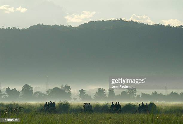 Elephants carrying tourists march in a line across the grasslands of Kaziranga National Park amid the mists of the early morning Kaziranga National...