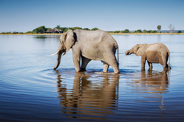 Elephants, Chobe National Park, Botswana Wall Art