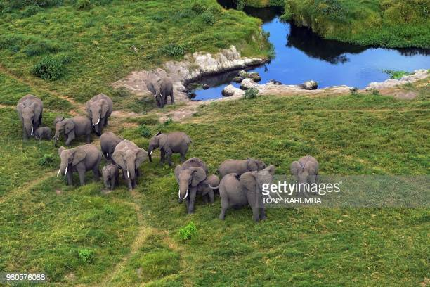 TOPSHOT Elephants clustered near a water source are spotted from the air during a trial run for an aerial census at the Amboseli National Park June...