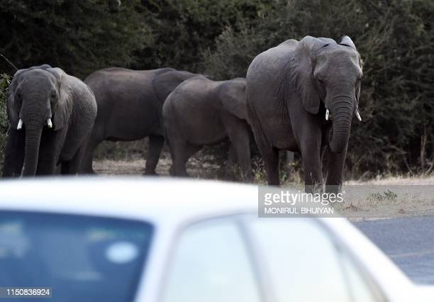 Elephants cross a road as cars drive by in Kasane in the Chobe district northern Botswana on May 28 2019 Last month the government lifted a blanket...