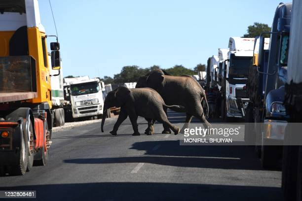 Elephants crossing the road packed with the trucks waiting to cross the river over the Kazungula bridge in Kazungula, Botswana, on May 10, 2021. - A...