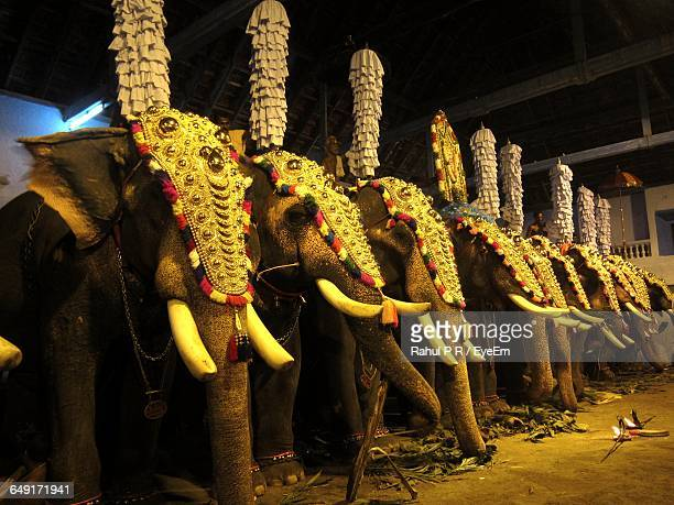 elephants decorated during procession at temple - kerala elephants stock pictures, royalty-free photos & images