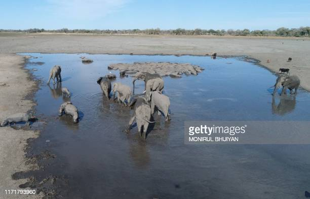 Elephants drink water in one of the dry channel of the wildlife reach Okavango Delta near the Nxaraga village in the outskirt of Maun, on 28...