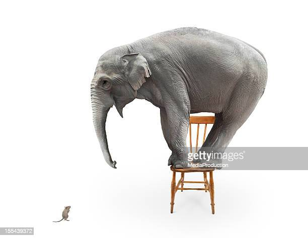 elephant's fear of mice - funny animals stock pictures, royalty-free photos & images