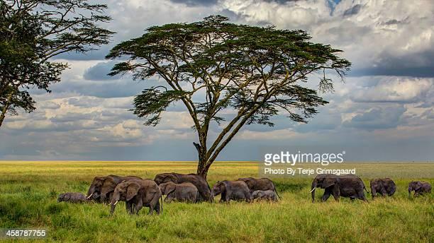Elephants heading for the waterhole