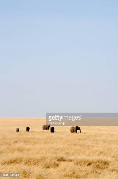 Elephants in African Serengeti