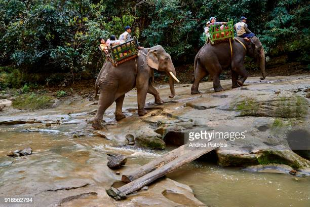 Elephants in Alaungdaw Kathapa National Park, Myanmar