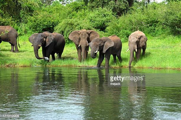 ボツワナで象