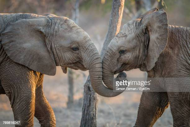elephants in forest - baby elephant stock photos and pictures