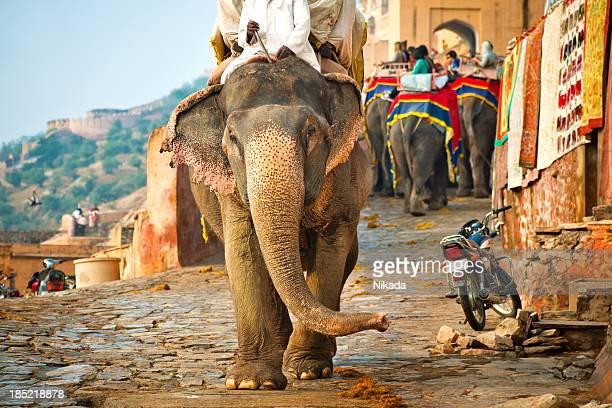 elephants in india - amber fort stockfoto's en -beelden