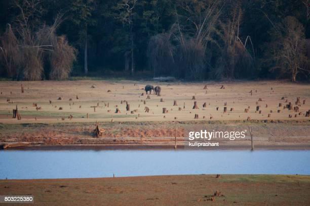 Elephants in NagarahoLe National Park