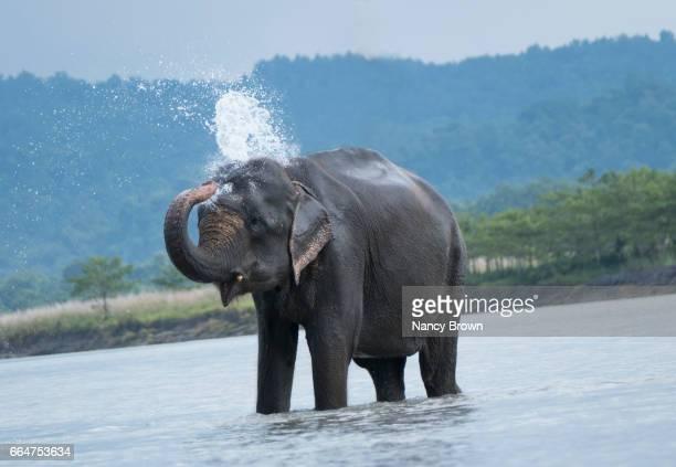 Elephants in Nepal near Chitwan Village.