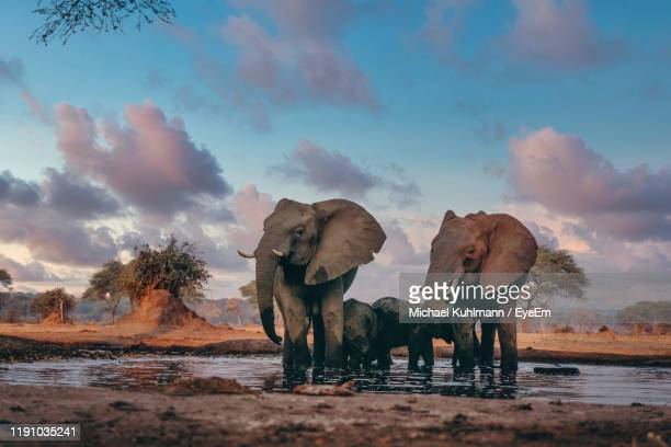 elephants in pond against sky - mammal stock pictures, royalty-free photos & images
