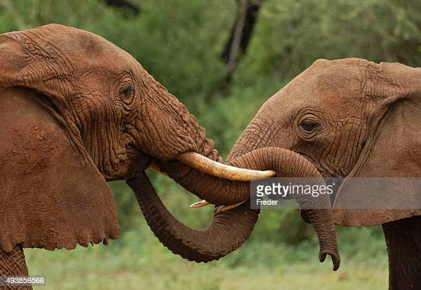 elephants in tanzania - tarangire national park stock pictures, royalty-free photos & images