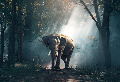 Elephants in the forest 588614058