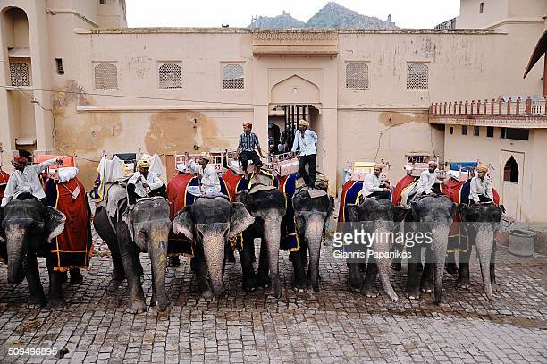 Elephants inside the Amber Fort in Jaipur, Rajasthan, India.