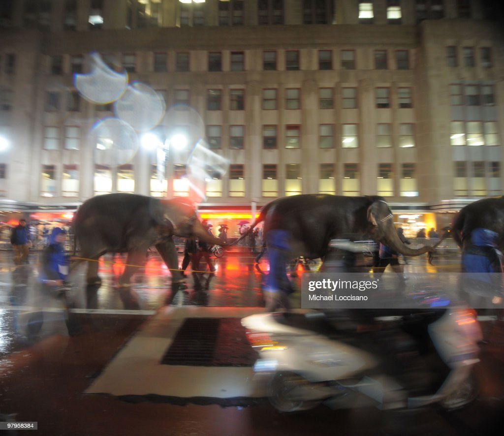 Elephants march into Manhattan for the Ringling Bros. and Barnum & Bailey's 'Barnum's Funundrum' on route from the Queens Midtown Tunnel to Madison Square Garden>> on March 22, 2010 in New York City.