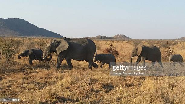Elephants On Field Against Clear Sky