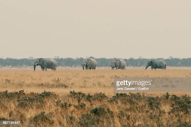 Elephants On Field Against Sky