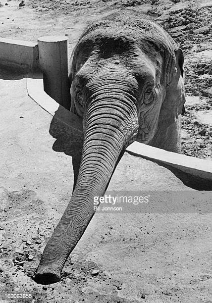 JUL 11 1969 Elephants