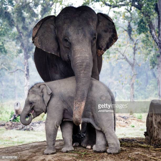 elephants - animal family stock pictures, royalty-free photos & images