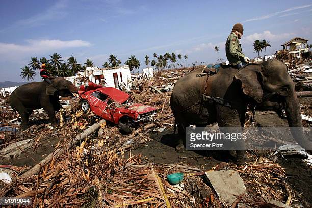 Elephants pull debris January 6 2005 to clear an area destroyed by the tsunami in Banda Aceh Indonesia The province of Aceh one of the worst hit...