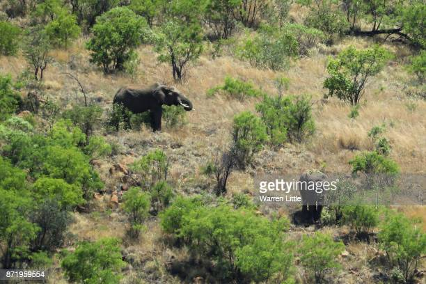 Elephants roam during the first round of the Nedbank Golf Challenge at Gary Player CC on November 9 2017 in Sun City South Africa
