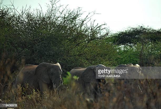 Elephants socialise near a watering hole at the Tsavo National Park on July 20 approximately 350 kilometres southeast of the capital Nairobi Kenya's...