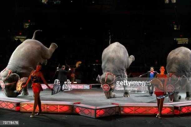 Elephants stand on their trunks during a live perfomance of Ringling Bros. And Barnum & Bailey Circus at Madison Square Garden on April 02, 2007 in...