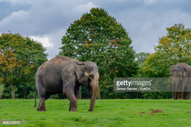 Elephants Standing On Field Against Sky