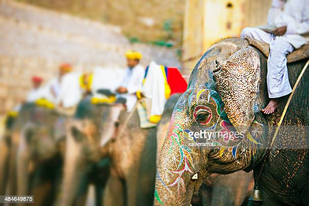 elephants waiting for people - amber fort stock pictures, royalty-free photos & images
