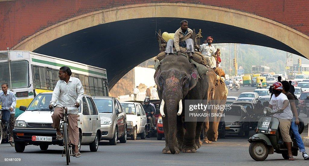 Elephants walk past traffic in New Delhi : News Photo