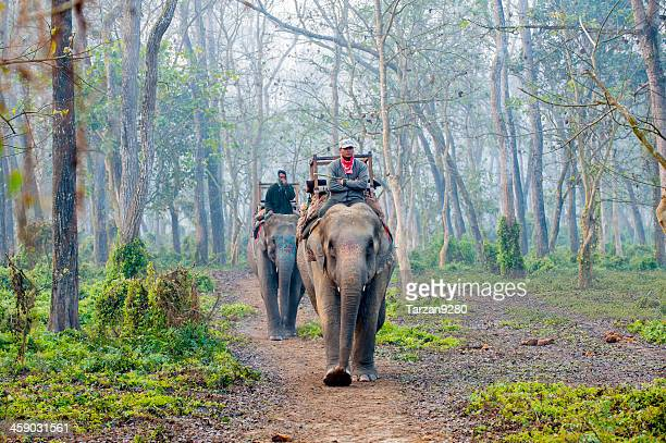elephants walking in forest, chitwan, nepal - chitwan stock pictures, royalty-free photos & images