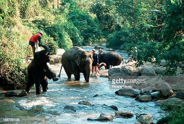 Elephants with their mahouts trek through the river at a remote camp near Chiang Mai, Thailand..