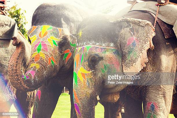 Elephants with traditional holi painting in India