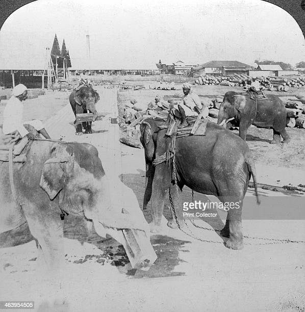 Elephants working in a timber yard India c1900s Stereoscopic card