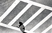 Elevated abstract view of a pedestrians shadow on a crosswalk at the picture id1006716416?s=170x170